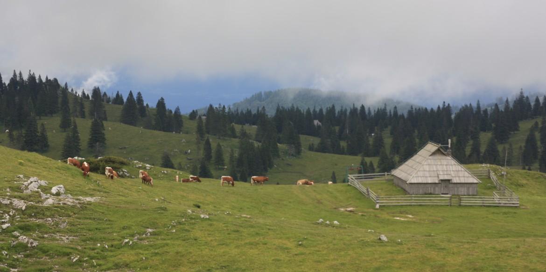 Velika Planina on helmi Slovenian Alpeilla