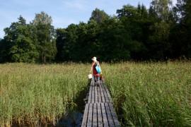Flow helsinki metsä